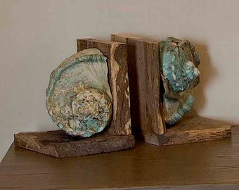 Bookends: Rough Live Oak and Turbo Marmoratus Shells
