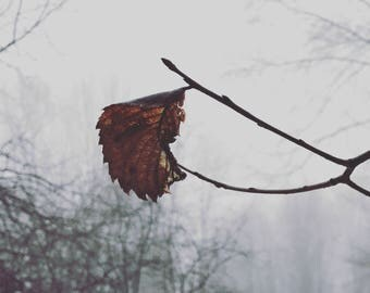 Photography, Nature Photography, Winter, Ice, Mom Photography, Art, Photography Prints