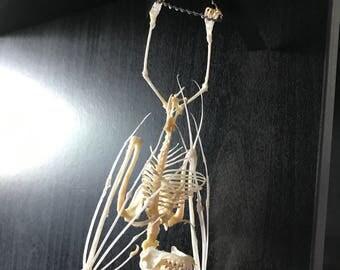Articulated Bat Skeleton