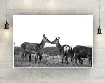 Deer Kiss Black and White Instant Download, Wall Art, Photography, Photo Print, Wildlife, Nature, Animals, Cute, Kissing, British, Love, Sky