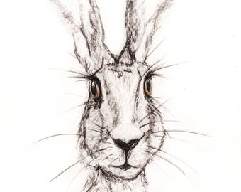Pencil and Charcoal sketch of Hare, Print