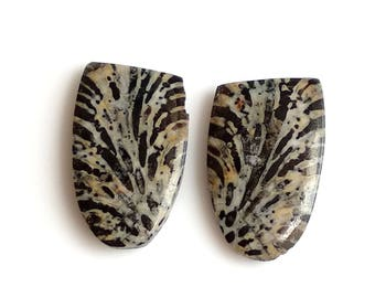 Black Coral Fancy Pair Cabochon,Size- 22x13, MM, Natural Black Coral, AAA,Quality  Loose Gemstone, Smooth Cabochons.