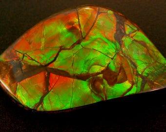 Huge Canadian Ammolite stone