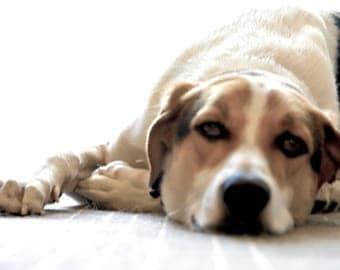 dog down days