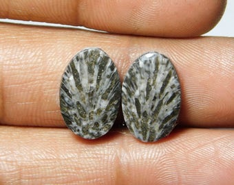 Pair ! Black Fossil coral Cabochons 100%Natural Black Fossil coral top quality Gemstone Black Fossil coral Loose stone 9.35cts.(16x10x3)mm