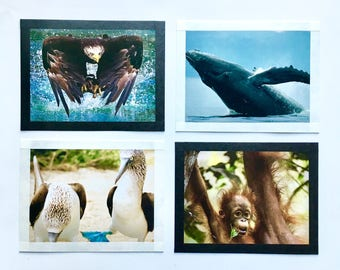 Animal Postcards - Set of Four