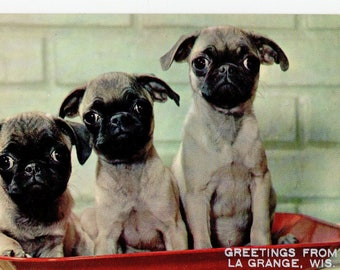 Vintage Pugs Postcard | Greetings From La Grange Wisconsin |  Photograph Card Dogs Puppies Pups Pets Pug Dog | Paper Ephemera