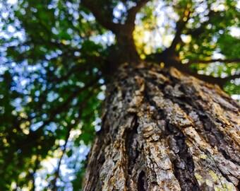 Tree Closeup Photo Print