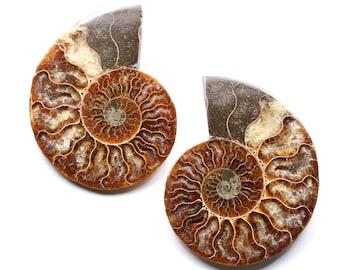 Pair of Ammonite - Fossil polished - Madagascar - 240 gr