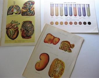 Vintage 1916 Medical Book Prints, Originals, Urine, Liver Complaint, Lungs, Heart, Graphic