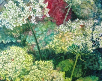 Queen Ann's Lace Study II an original watercolor