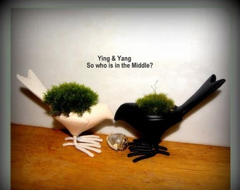 Save25% Moss Ying and Yang Black and White Peace and love- 2 metal Moss Bird planters-Crow about this one to your friend-Live Mood moss p...