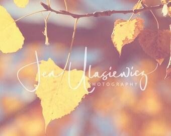 I Heart Fall Nature Photography Print, leaf, tree, autumn