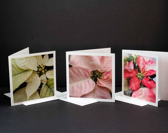 Poinsettia Cards, Greeting Cards, Holiday Cards, Flower Cards, Floral Note Cards