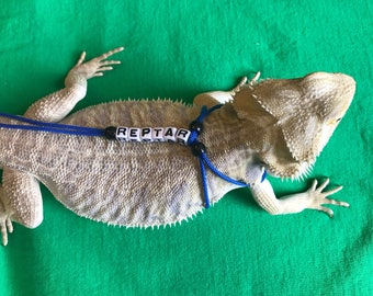 Personalized Royal Blue Bearded Dragon Leash *Small Beads*
