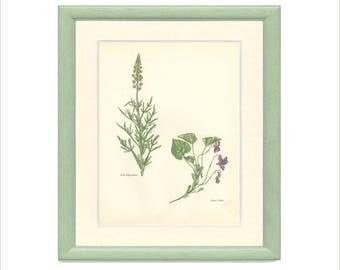Print Vintage Fleur Sauvage, Mignonette Sauvage, Violet Doux, Histoire Naturelle de Botanique Fleur (35) 1963, Svolinsky