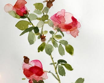 Pink Garden Roses no. 4 Original Watercolor Floral Painting by Angela Moulton