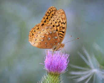 Butterfly on Thistle Flower on Blank Note Card 5 x 7 Perfect All Occasion Card Friendship Card -  Lovely Nature Photography