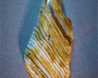 Hells Canyon Petrified Wood Cabochon