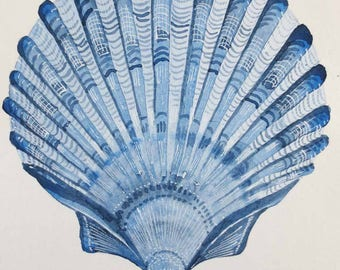 Original scallop clam sea shell painting illustration seaside ocean beach collection series