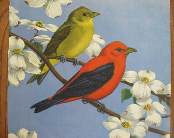 Orig 1930s  9+ x 12 Bird Bookplate IllustrationMale Female Tanager Birds Luscious Matte Color Paper MORE for Pair Trio Dogwood Print Prints