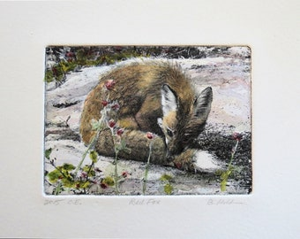 Red Fox hand-tinted photo etching