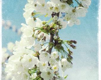 Flower Photography, White Blossom, White Flower Art, Flower Photo, Nature Photography, Fine Art Print, White Flower, Floral, Spring