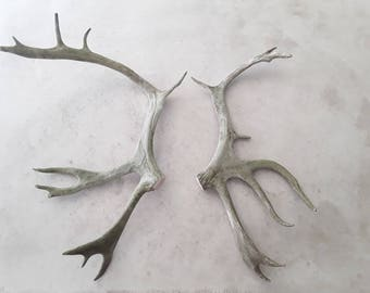 2 natural real caribou antlers design decor crafts rustic antler display