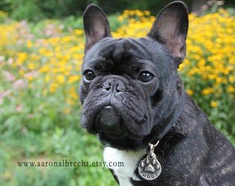Personalized Pet Tag Pet ID Tag Dog ID Tag Custom Pet Tag Dog Name Tag Dog Tag for Dog Frenchie
