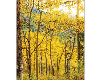 Landscape Photography 'Aspen Path' by Meirav Levy - Autumn Nature Art Contemporary Aspen Trees Decor on Metal or Plexiglass
