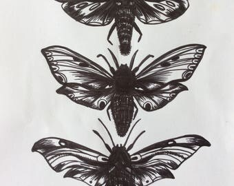 Three Moths Original Ink Drawing on ink & Papper