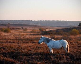Horse photo, horse wall art, pony photo, equine art, shetland pony photo, horse decor, horse art, equestrian decor