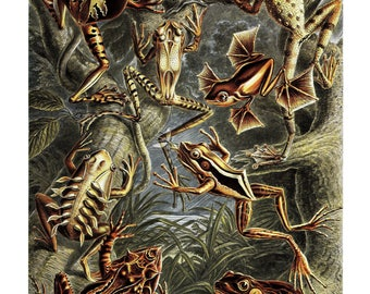 Ernst Haeckel's Vintage Artwork Batrachia