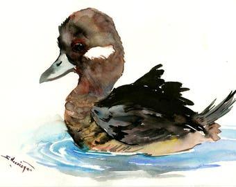Duck Artwork , Bufflehead Duck, original watercolor painting, ducks, duck art, duck painting