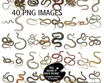 SALE: Clipart Snakes Digital Vintage Images - Vintage Snake Digital Clip Art - 40 PNG Images - Instant Download - Clipart Snakes - Halloween