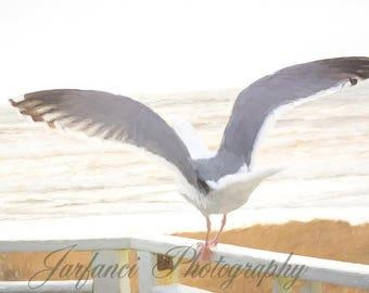 Seagull overlooking the ocean