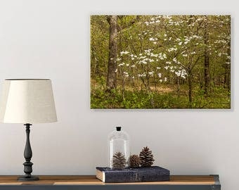 Dogwood Tree Wall Art - Bathroom Picture - Nature Canvas - Landscape Art - Canvas Wall Art - Country Cottage Decor - Forest Art Print
