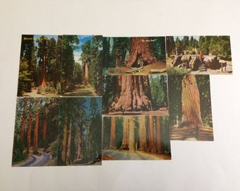 9 California Trees Vintage Postcards Sequoia Kkings Canyon National Parks Redwoods Scenic Color Unused