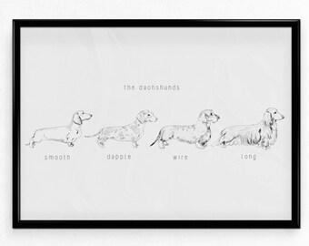The Dachshunds Print | A4