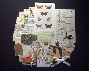 Unique Vintage Nature / Natural History ephemera and neutral collected paper pack