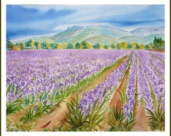 Watercolor - fields of Provence IRIS