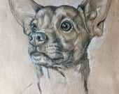 Custom pet portrait pencil and charcoal drawing, pet memorial, portrait