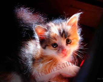 Cute Kitty Photography