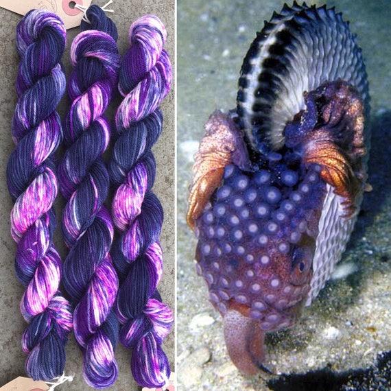 Argonaut Miniskein 20g, cephalopod inspired merino nylon sock yarn