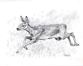 Study of wild animals - deer