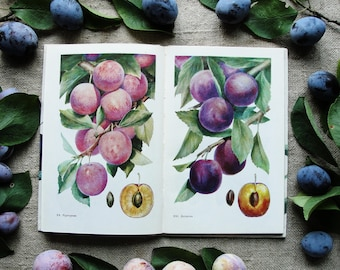 Plum and Cherry Plum - 12 sheets of illustrations (24 Color Plates) - Hardcover -- Vintage Botanical Book, 1989. Garden Plants Drawing Print