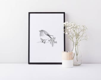 Little Robin A5 Vintage Style Line Drawing Print