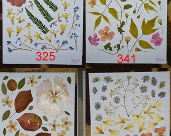 Dried pressed flowers wedding decor or arts and craft embelishment - #325 #341 #272 #318