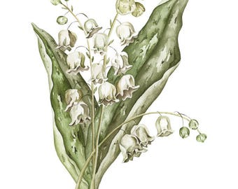 Botanical Lily of the Valley