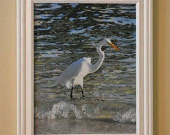 Great Egret Framed Original Photograph 8 x 10
